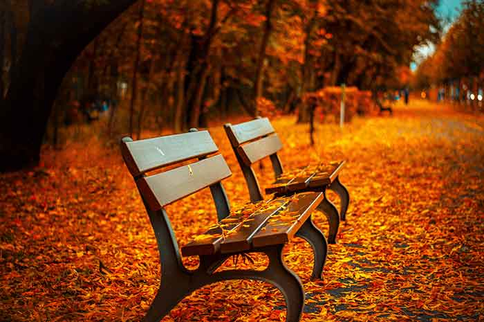 bench-autumn